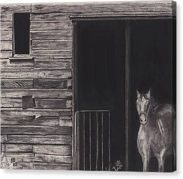 Horse In Barn Canvas Print