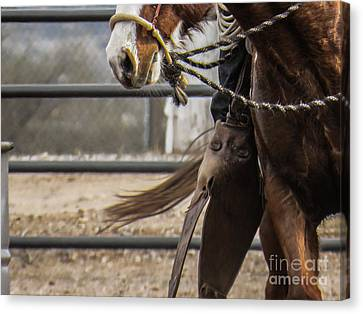Horse In Hackamore Canvas Print
