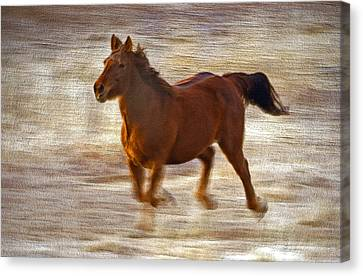 Horse In Motion Canvas Print by James Steele