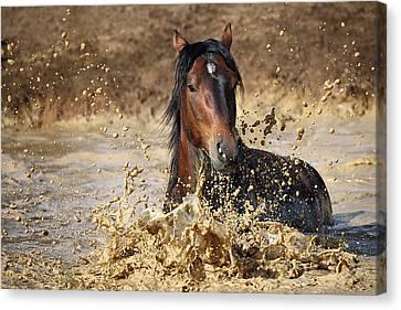 Horse In Water Canvas Print by Vedran Vidak