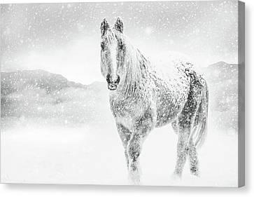 Horse In Winter Snow Storm Canvas Print by Debi Bishop