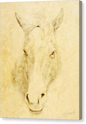 Horse  Canvas Print by Jeremy Martinson