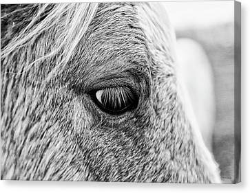 Horse Look Canvas Print