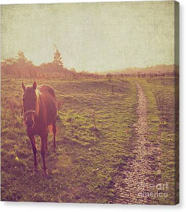 Canvas Print featuring the photograph Horse by Lyn Randle