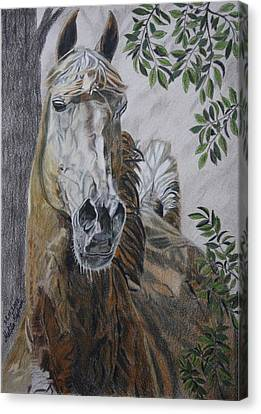 Canvas Print featuring the drawing Horse by Melita Safran