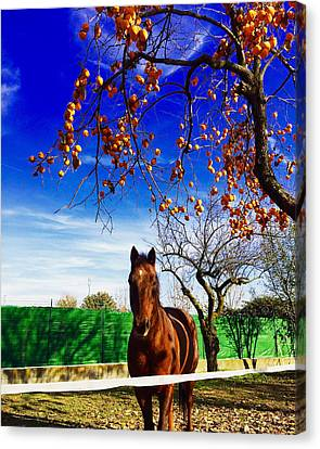 Horse Canvas Print by Niki Mastromonaco