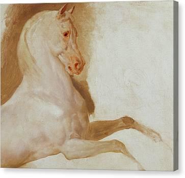 Horse Of Joachim Murat Canvas Print by Baron Antoine Jean Gros