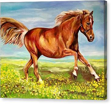 Horse On A Field  Canvas Print by Olga Koval