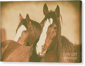 Canvas Print featuring the photograph Horse Portrait by Ana V Ramirez