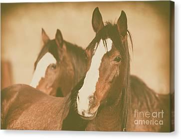 Canvas Print featuring the photograph Horse Portrait by Ana V Ramirez
