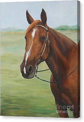 Horse Portrait Canvas Print by Charlotte Yealey