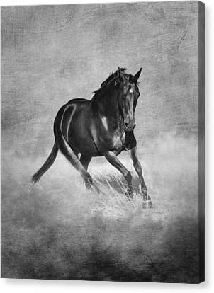 Horse Power Black And White Canvas Print by Michelle Wrighton