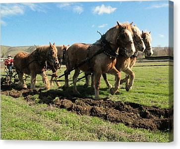 Plow Horse Canvas Print - Horse Power by Jeff Swan