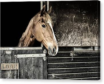 Canvas Print featuring the photograph Horse Profile In The Stable by Marion McCristall