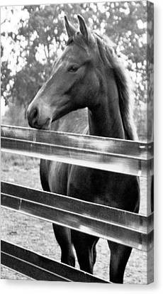 Horse Sense Canvas Print by Brian Foxx
