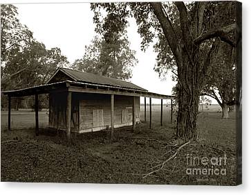 Horse Shelter Canvas Print by Joseph G Holland