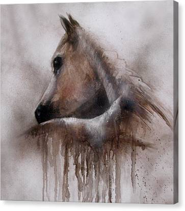 Horse Shy Canvas Print by Jackie Flaten