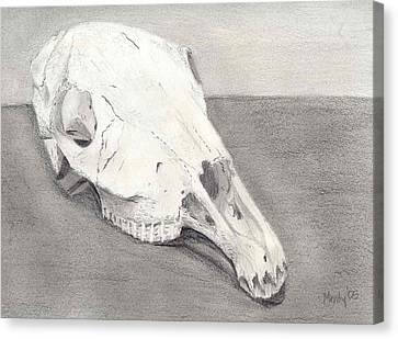 Horse Skull Canvas Print by Mendy Pedersen