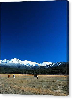 Horse Valley Canvas Print