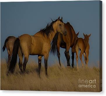 Horses 1 Canvas Print