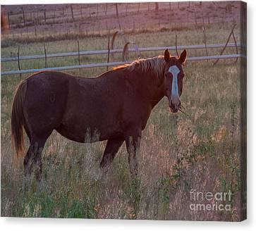 Horses 2 Canvas Print