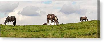 Horses And Clouds Canvas Print