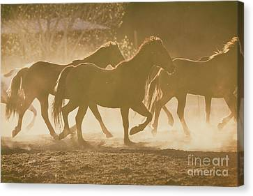 Canvas Print featuring the photograph Horses And Dust by Ana V Ramirez