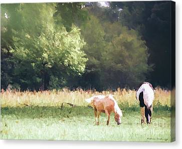 Canvas Print featuring the photograph Horses by Andrea Anderegg
