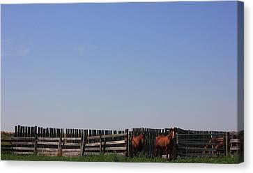 Horses - Corrals - And Alberta Prairie Sky Canvas Print