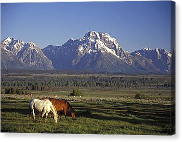 Horses Graze At Lost Creek Ranch Canvas Print by Richard Nowitz