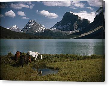 Horses Graze In A Lakeside Meadow Canvas Print by Walter Meayers Edwards