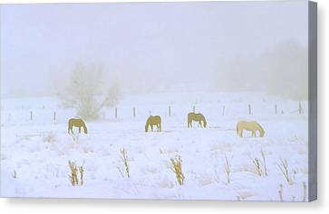 Horses Grazing In A Field Of Snow And Fog Canvas Print by Steve Ohlsen