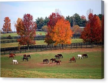 Canvas Print featuring the photograph Horses Grazing In The Fall by Sumoflam Photography