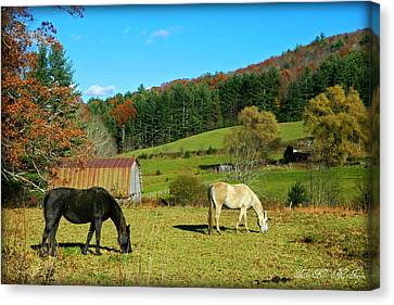 Horses Grazing The Pasture Canvas Print