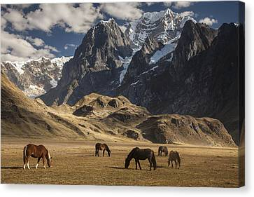 Horses Grazing Under Siula Grande Canvas Print by Colin Monteath