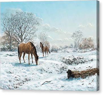 Canvas Print - Horses In Countryside Snow by Martin Davey