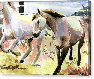 Horses In Late Morning Light Canvas Print by Jamie Lindenmeier