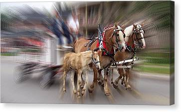 Horses In Motion Canvas Print by David and Lynn Keller