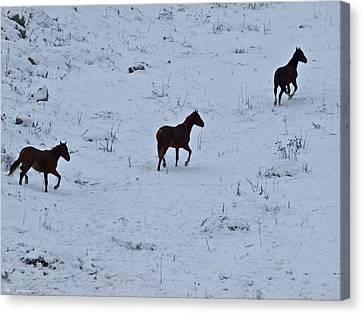 Israel Canvas Print - Horses In Snow 3  by Arik Baltinester