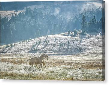 Horses In The Frost Canvas Print by Keith Boone