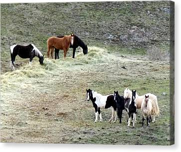 Horses In The Highlands Canvas Print