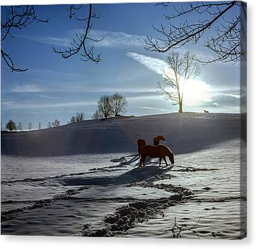 Horses In The Snow Canvas Print by Greg Reed
