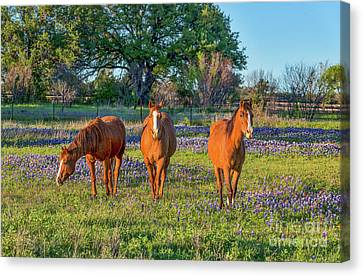 Horses In The Wildflowers Canvas Print