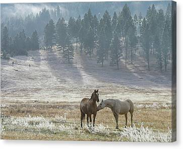Horses On A Montana Ranch Canvas Print by Keith Boone