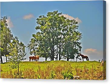 Horses On A Hill Canvas Print by Bill Cannon