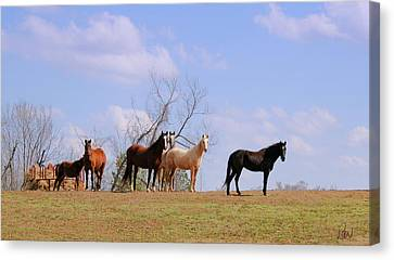 Canvas Print featuring the photograph Horses On The Hill by Bonnie Willis