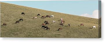 Horses On The Hill Canvas Print