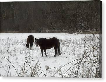 Horses Two Canvas Print by Ross Powell