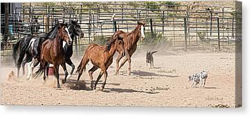 Horses Unlimited #3a Canvas Print