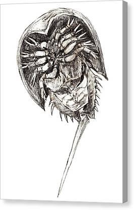 Horseshoe Crab Canvas Print